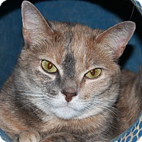 Adopt A Pet :: Hope - North Branford, CT