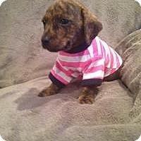 Adopt A Pet :: Kia - Marlton, NJ