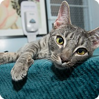 Adopt A Pet :: Hazelnut - New York, NY
