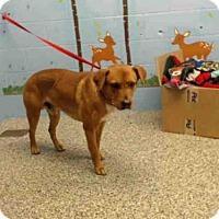 Adopt A Pet :: A490149 is in danger in San Bernardino City - Beverly Hills, CA