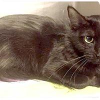 Adopt A Pet :: Rosalyn - Springdale, AR