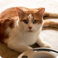 Adopt A Pet :: Sultan - Daleville, AL