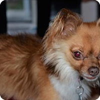 Adopt A Pet :: Rusty- Adoption Pending - Fairfield, OH