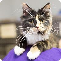 Adopt A Pet :: Disco - Fargo, ND