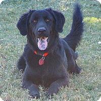 Retriever (Unknown Type) Mix Dog for adoption in Melbourne, Arkansas - JET