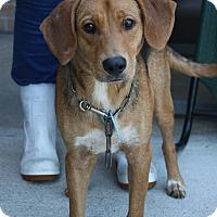 Adopt A Pet :: Hugo - Beaumont, TX