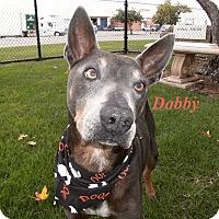 Adopt A Pet :: Dobby - El Cajon, CA
