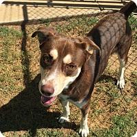 Adopt A Pet :: Duke (CNC) - Cincinatti, OH