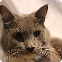 Adopt A Pet :: #409 Socks - Granite City, IL