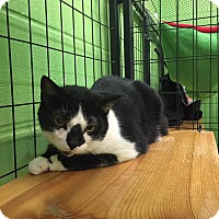Adopt A Pet :: maggie - Bryan, OH
