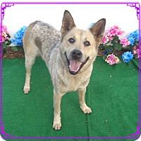 Adopt A Pet :: HUNTER - Marietta, GA