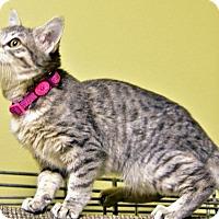 Adopt A Pet :: Sissyphysus - St. Louis, MO