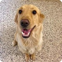 Adopt A Pet :: Creek - Aiken, SC