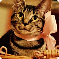 Where To Adopt A Cat In Lakeland Florida