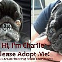 Adopt A Pet :: Charlie - Eagle, ID