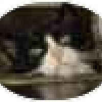 Adopt A Pet :: Noel - Jenkintown, PA