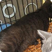 Adopt A Pet :: Macchiato - Dallas, TX
