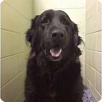 Adopt A Pet :: Frodo - UPDATED - Foster, RI