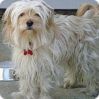 Adopt A Pet :: Bunky - Mount Kisco, NY