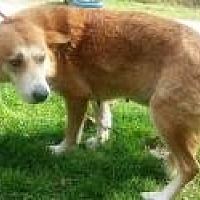 Husky/Collie Mix Dog for adoption in Prestonsburg, Kentucky - mama fluff