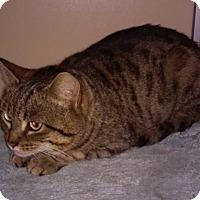 Adopt A Pet :: Ingrid - Franklin, NH