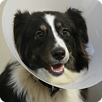 Adopt A Pet :: Dixie - Rockwall, TX