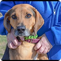 Hound (Unknown Type) Mix Dog for adoption in Brick, New Jersey - Sheldon