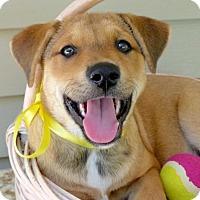 Adopt A Pet :: Ellen - Baton Rouge, LA