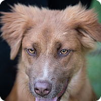Adopt A Pet :: Chase - Daleville, AL