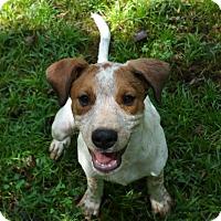 Adopt A Pet :: Alan - Haggerstown, MD