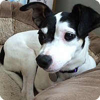 Adopt A Pet :: Stella - Homewood, AL