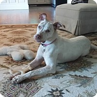 Adopt A Pet :: Ginger!!! - Huntsville, TN