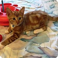 Adopt A Pet :: Chaser - Orange, CA