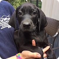 Adopt A Pet :: Kayne - Cashiers, NC
