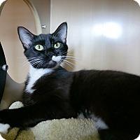 Adopt A Pet :: Wednesday - Kingston, WA