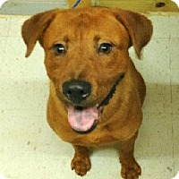 Adopt A Pet :: Charlie - Sharon, CT