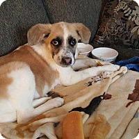Adopt A Pet :: Skipper - Rexford, NY