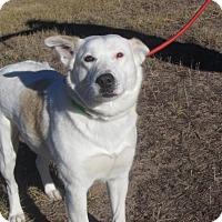 Adopt A Pet :: Scarlet - Ridgway, CO