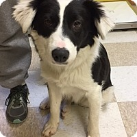 Adopt A Pet :: Elwood - Kingman, KS