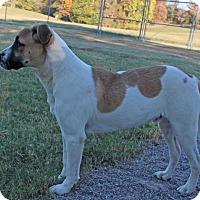 Adopt A Pet :: Denver - Savannah, TN