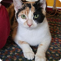 Adopt A Pet :: Carolina - Addison, IL