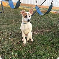 Adopt A Pet :: Madison - New Oxford, PA