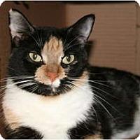 Adopt A Pet :: Calypso - Bonita Springs, FL
