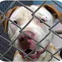 Adopt A Pet :: Mack - Emory, TX