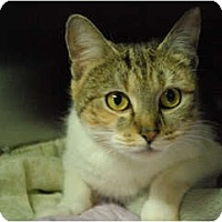 Adopt A Pet :: Christina - Lunenburg, MA