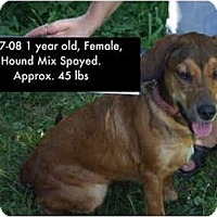 Adopt A Pet :: I.D. # 657-08 - RESCUED! - Zanesville, OH