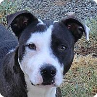Adopt A Pet :: Mickey - Sacramento, CA