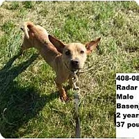 Adopt A Pet :: Radar - RESCUED! - Zanesville, OH
