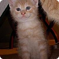Adopt A Pet :: Clem - Reston, VA