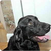 Adopt A Pet :: Cooper - Cumming, GA